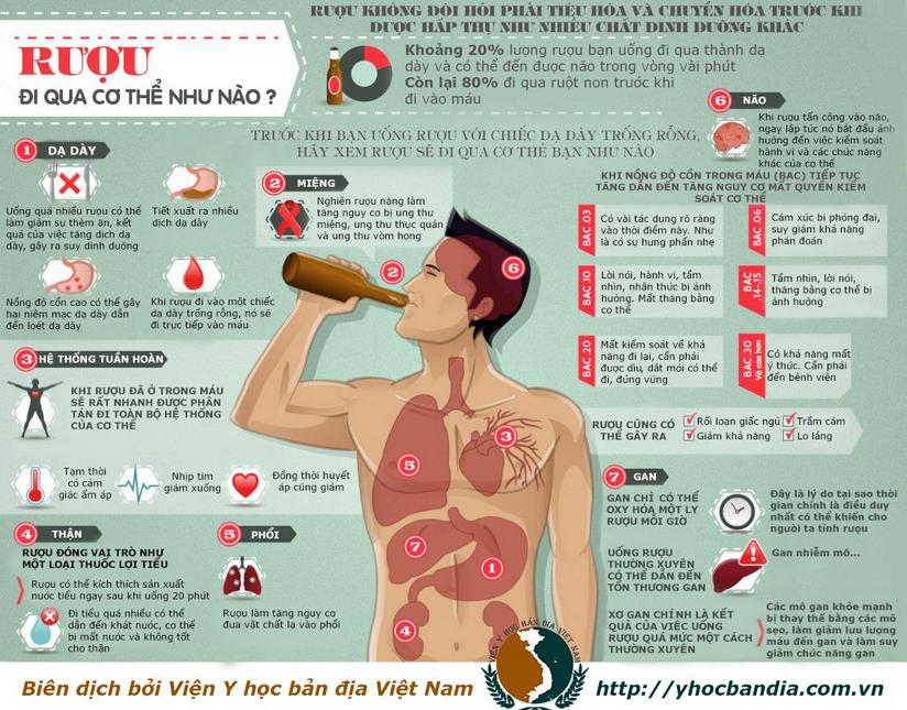 Hành trình chuyển hóa rượu tại gan