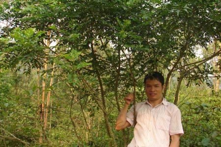 Hướng đi mới cho liệu pháp bảo vệ lá gan người Việt bằng Ưng Bất Bạc