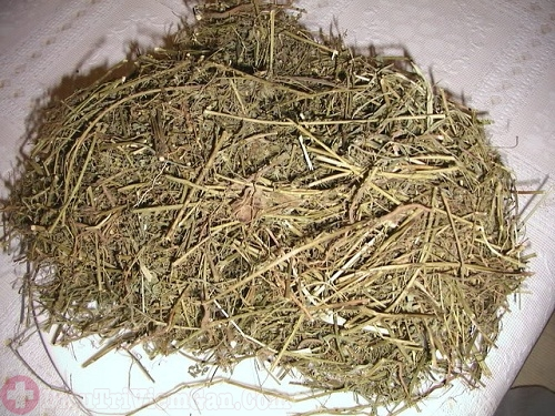 Điều trị viêm gan B bằng cây chó đẻ và đường