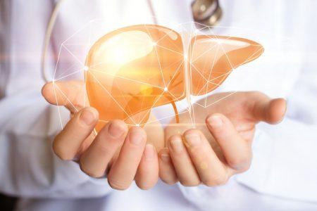 Ưng bất bạc – dược liệu vàng cho các tổn thương gan sớm