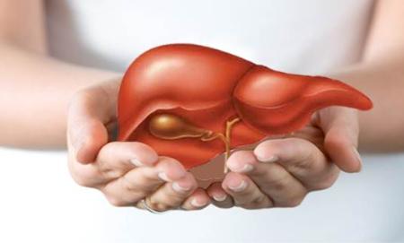 Bảo vệ tế bào gan từ dược liệu quý ngàn năm, công nghệ được Mỹ cấp bằng sáng chế