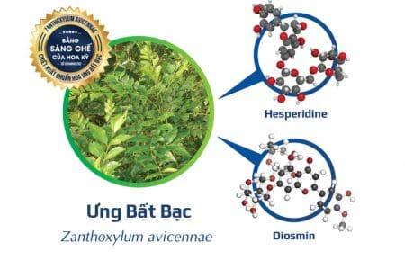 Ưng Bất Bạc – Cây thuốc quý giúp hỗ trợ phục hồi và tái tạo tế bào gan