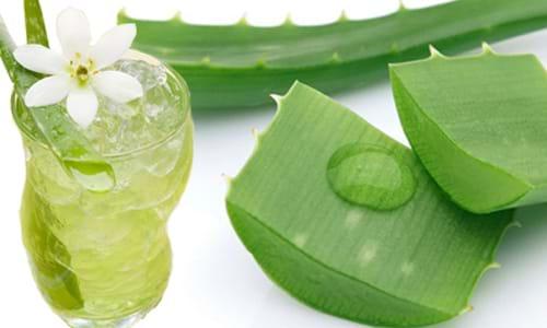 Sử dụng các thảo dược thiên nhiên giúp kiểm soát bệnh hiệu quả hơn