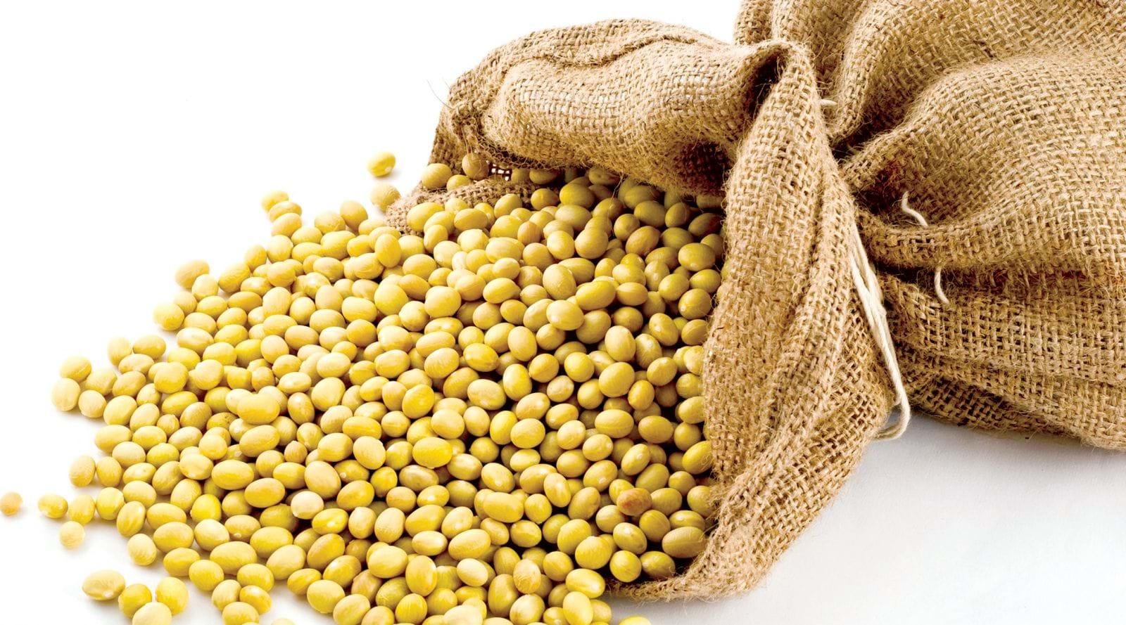 Người bị gan nhiễm mỡ nên thường xuyên dùng các thực phẩm từ đậu nành