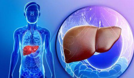 Nguyên nhân men gan cao và những ảnh hưởng của nó tới gan