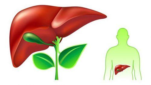 Làm thế nào để bảo vệ tế bào gan?