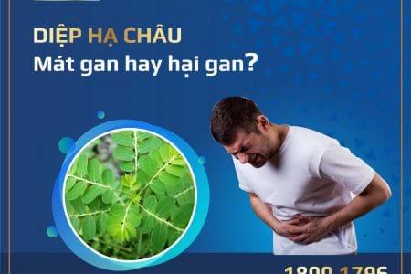 Diệp hạ châu từ mát gan thành hại gan