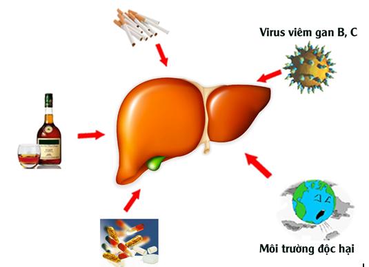 bảo vệ tế bào gan